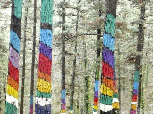 Perspective en forêt